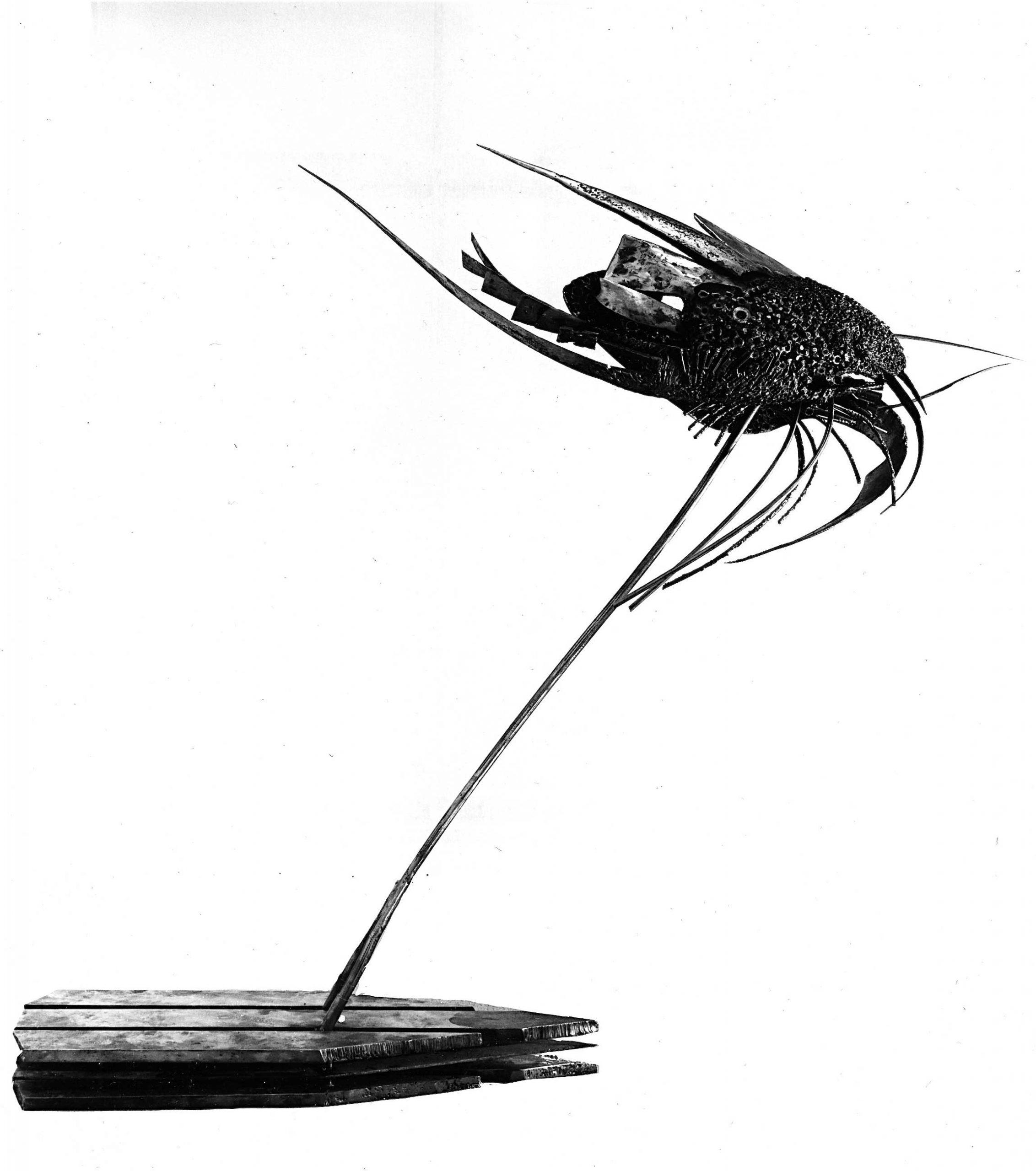 Le-molusque-01