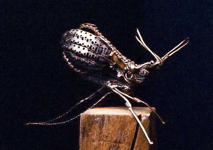 Le-moustique-02