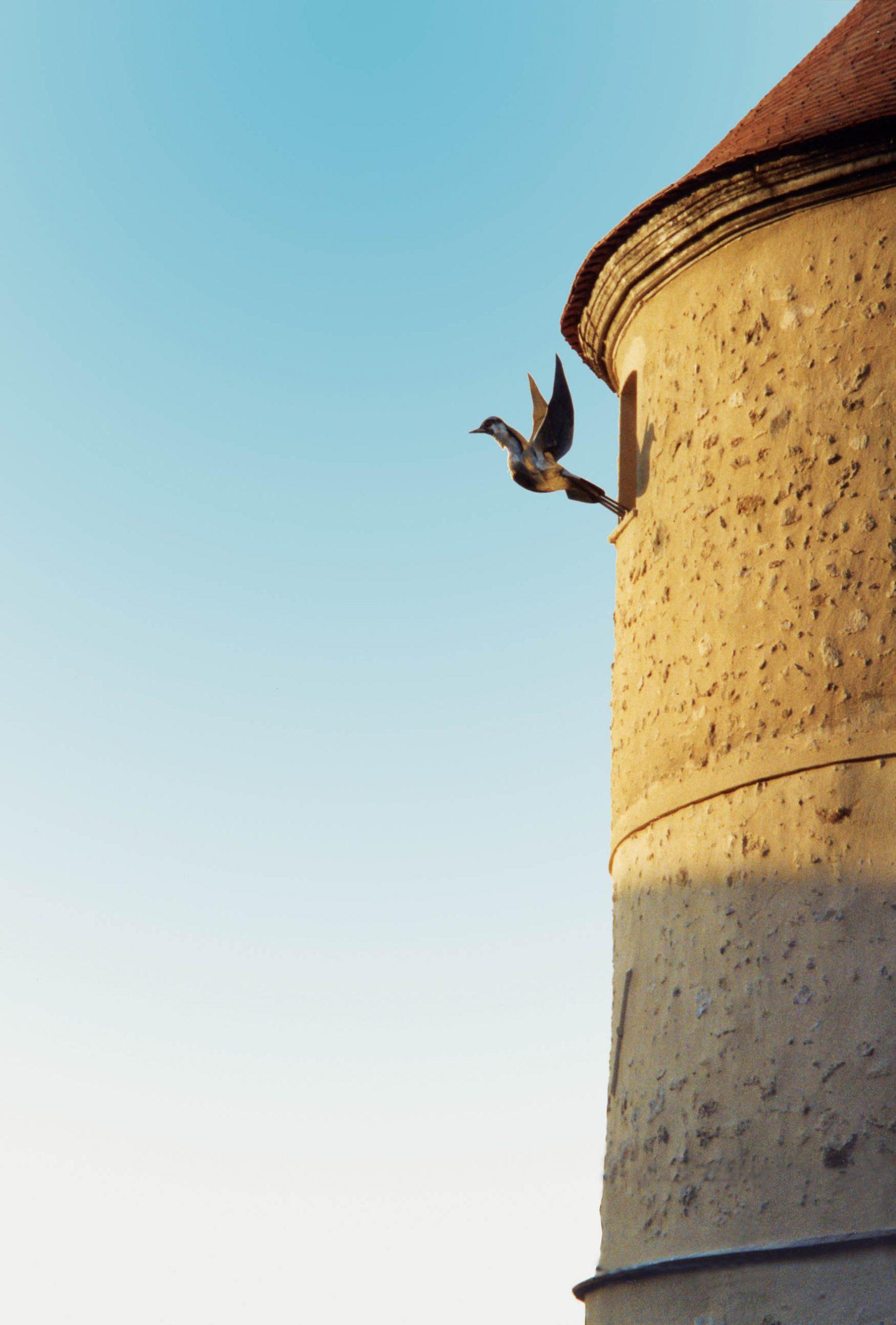 tour- pigeon058